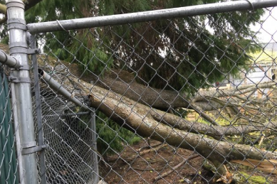 tree-that-has-fallen-on-chain-link-fence-causing-it-to-lean-and-break-and-needs-fixed